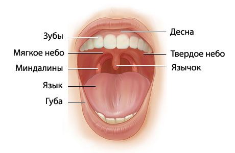 in the mouth of jaws analysis